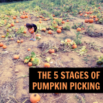 The Five Stages of Pumpkin Picking